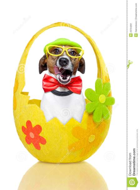 dog-colorful-easter-egg-23754261